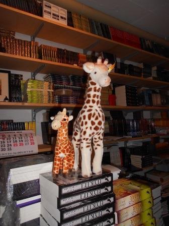 2-Giraffen-klein